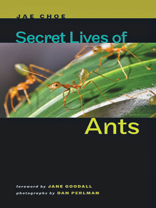 Secret Lives of Ants
